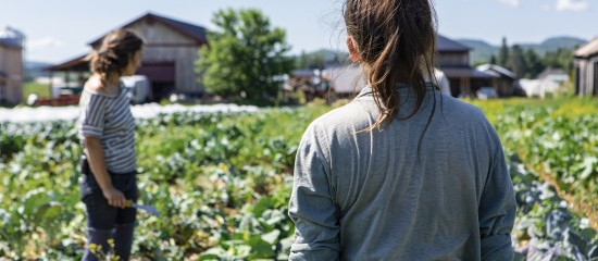 Le gouvernement vient de lancer un appel national à renforcer l'agriculture. L'objectif étant de faire face à la pénurie de main d'œuvre qui menace les prochaines récoltes.